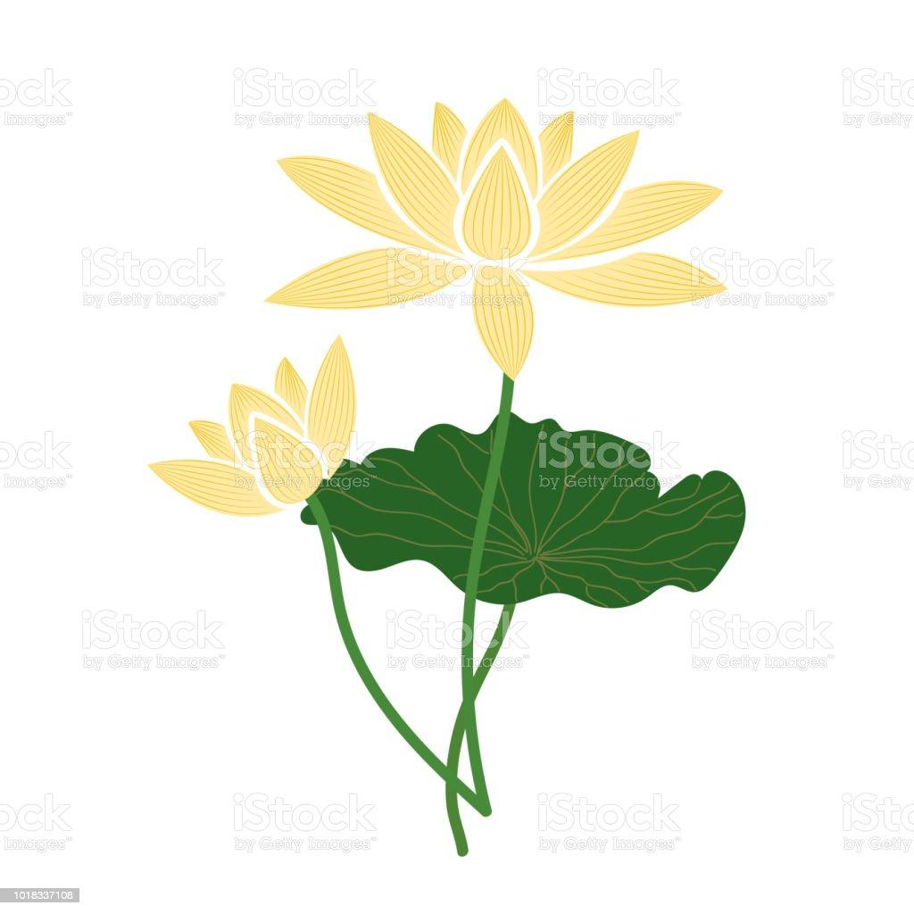 Naturaleza flor amarilla flor de loto, planta de hoja floral de jardín botánico de vector. - ilustración de arte vectorial