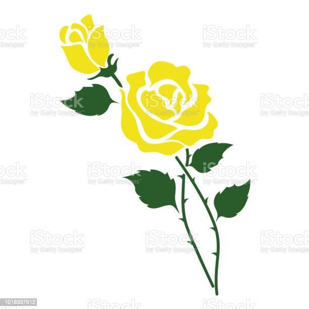 Nature flower yellow rose vector botanic garden floral leaf plant vector id1018337512?b=1&k=6&m=1018337512&s=612x612&h=zaacvfhadcvfzmpc ftkr8ga8zgxmzxvucoups1nipm=
