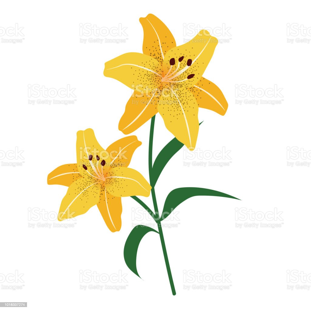 Naturaleza flor amarillo lirio de tigre, planta de hoja floral de jardín botánico de vector. - ilustración de arte vectorial