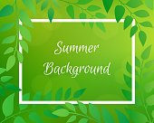 Nature gradient backdrop with foliage and rectangular frame. Gre