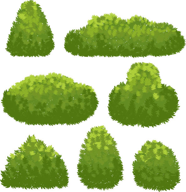 nature hedge, garden green bushes. cartoon shrub and bush vector set isolated on white background - куст stock illustrations