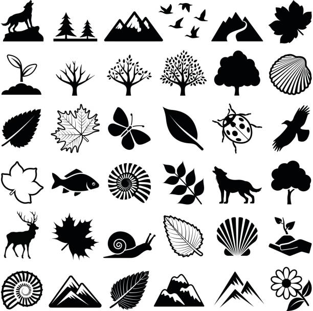 nature icons - fossilized leaves stock illustrations