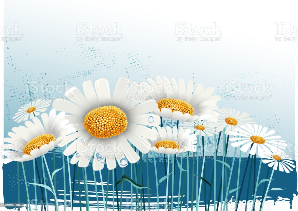 nature in daisy royalty-free stock vector art