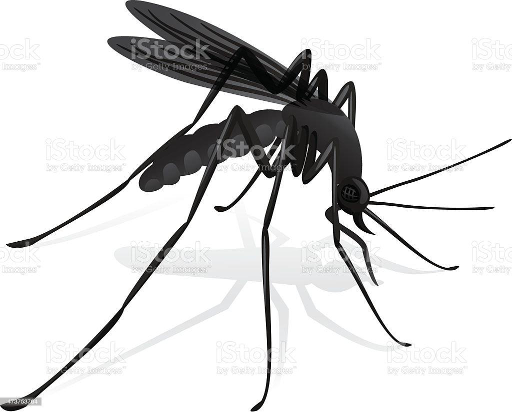 Nature, mosquitoes stilt disease transmitter. vector art illustration