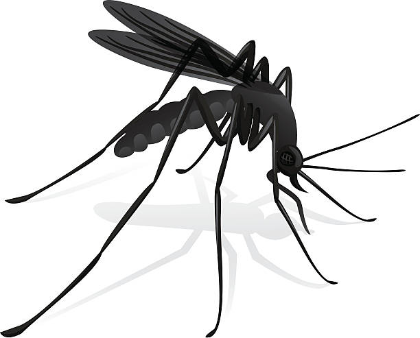 Nature, mosquitoes stilt disease transmitter. Nature, mosquitoes stilt disease transmitter. Ideal for informational and institutional sanitation and related care. swarm of insects stock illustrations