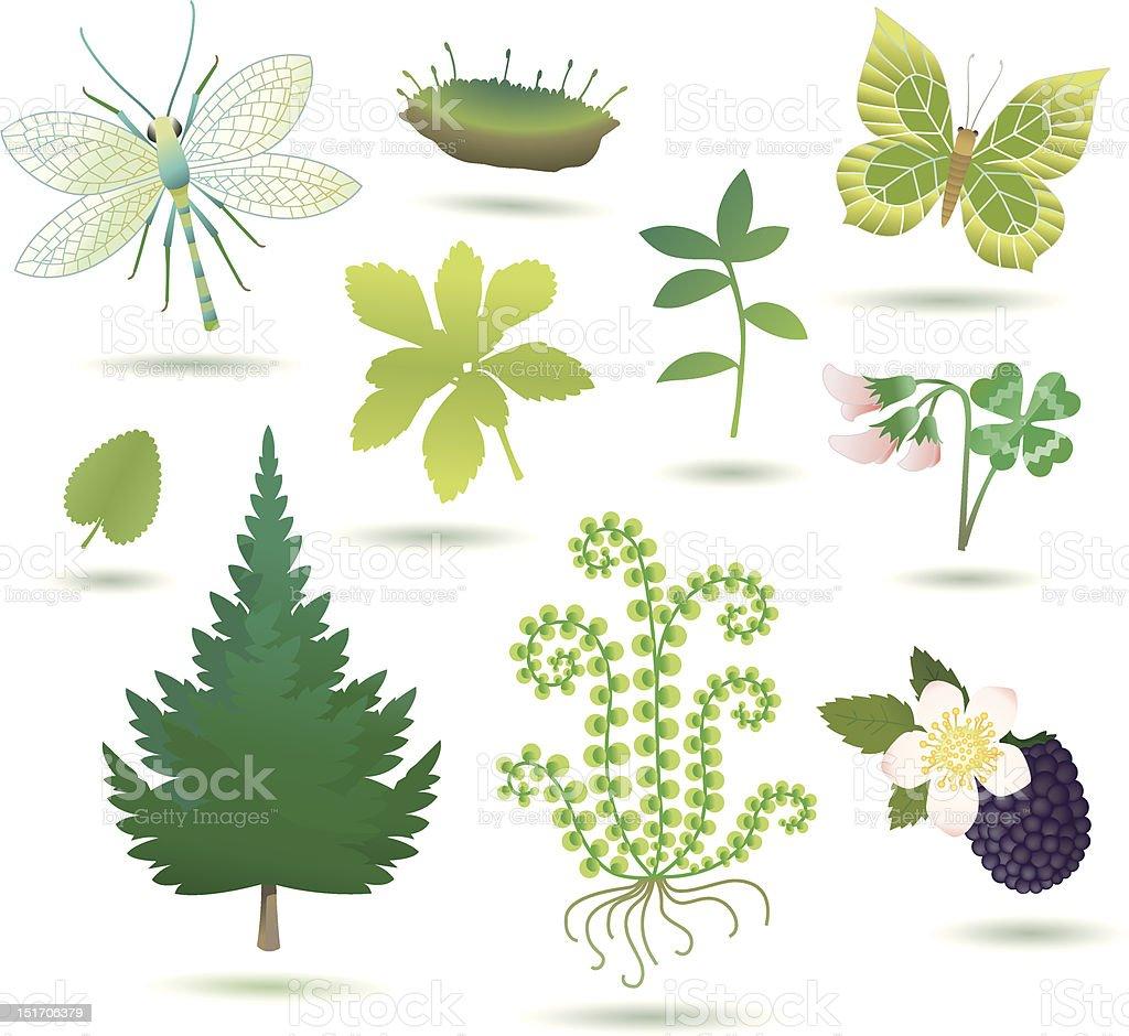 nature objects III. vector art illustration