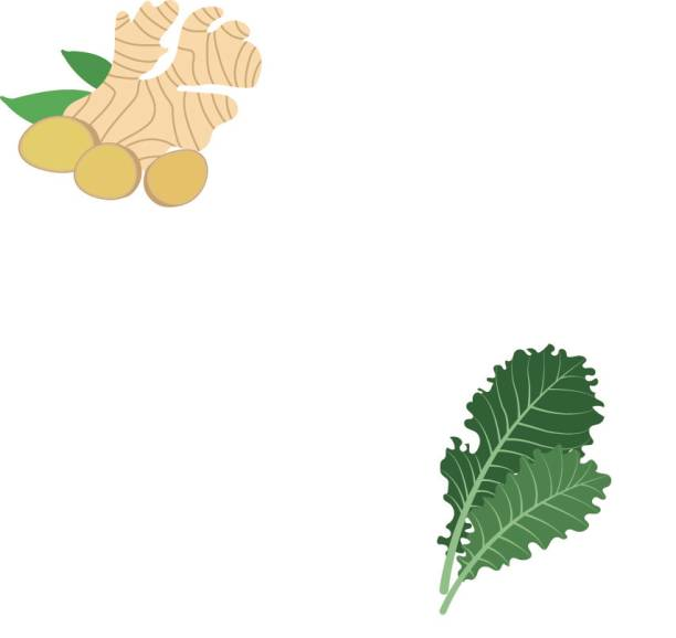 Nature organic vegetable Kale, healthy vector colorful food vegetable spice ingredient. Nature organic vegetable Kale, healthy vector colorful food vegetable spice ingredient. kale stock illustrations