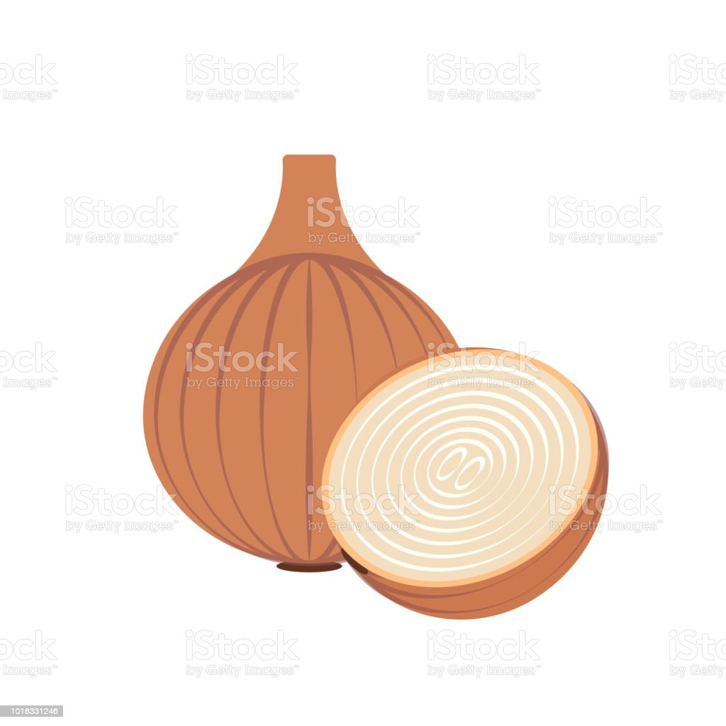 Nature organic vegetable Onion, healthy vector colorful food...