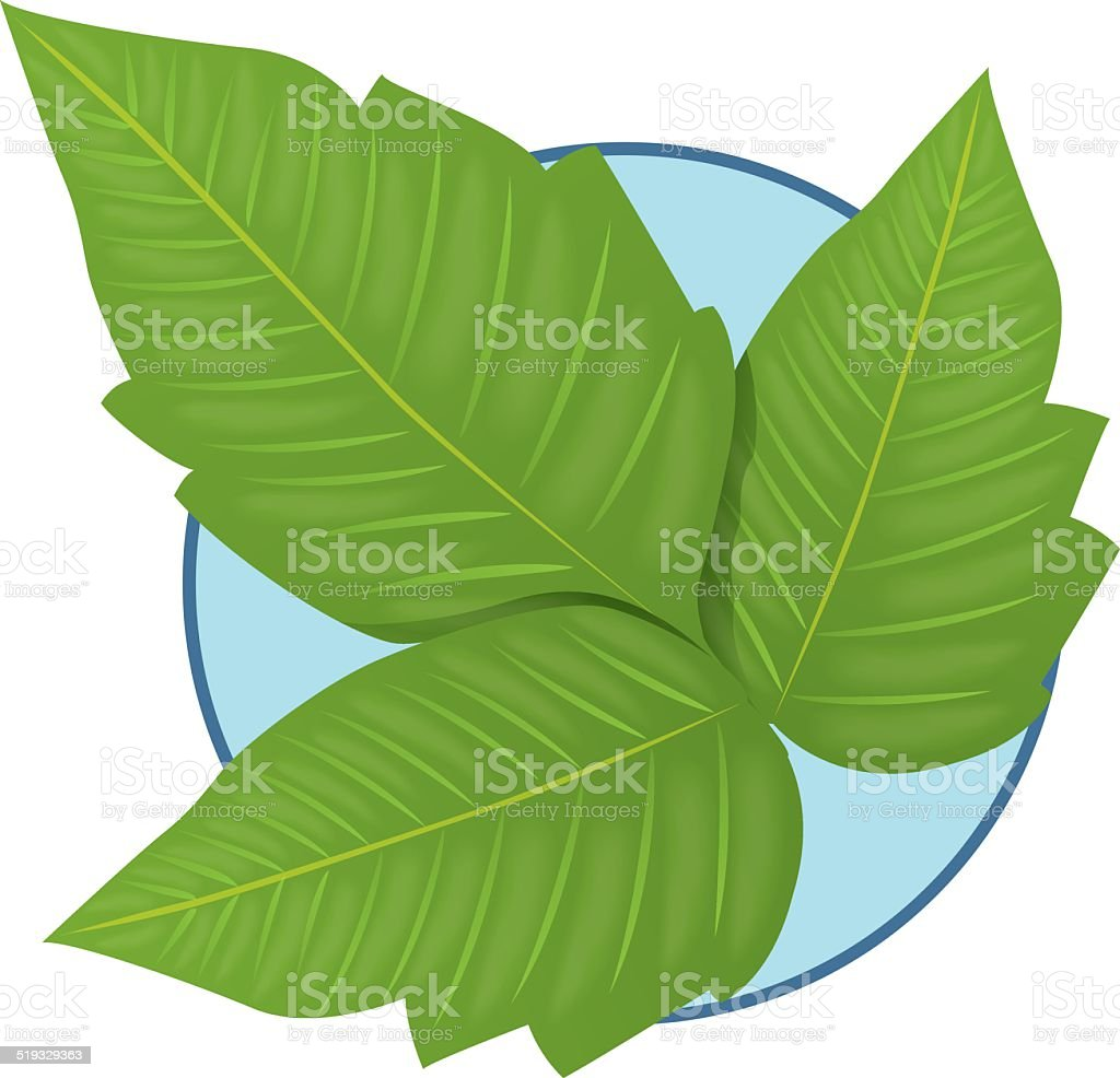 Nature Plant Poison Ivy Stock Illustration - Download Image Now ...