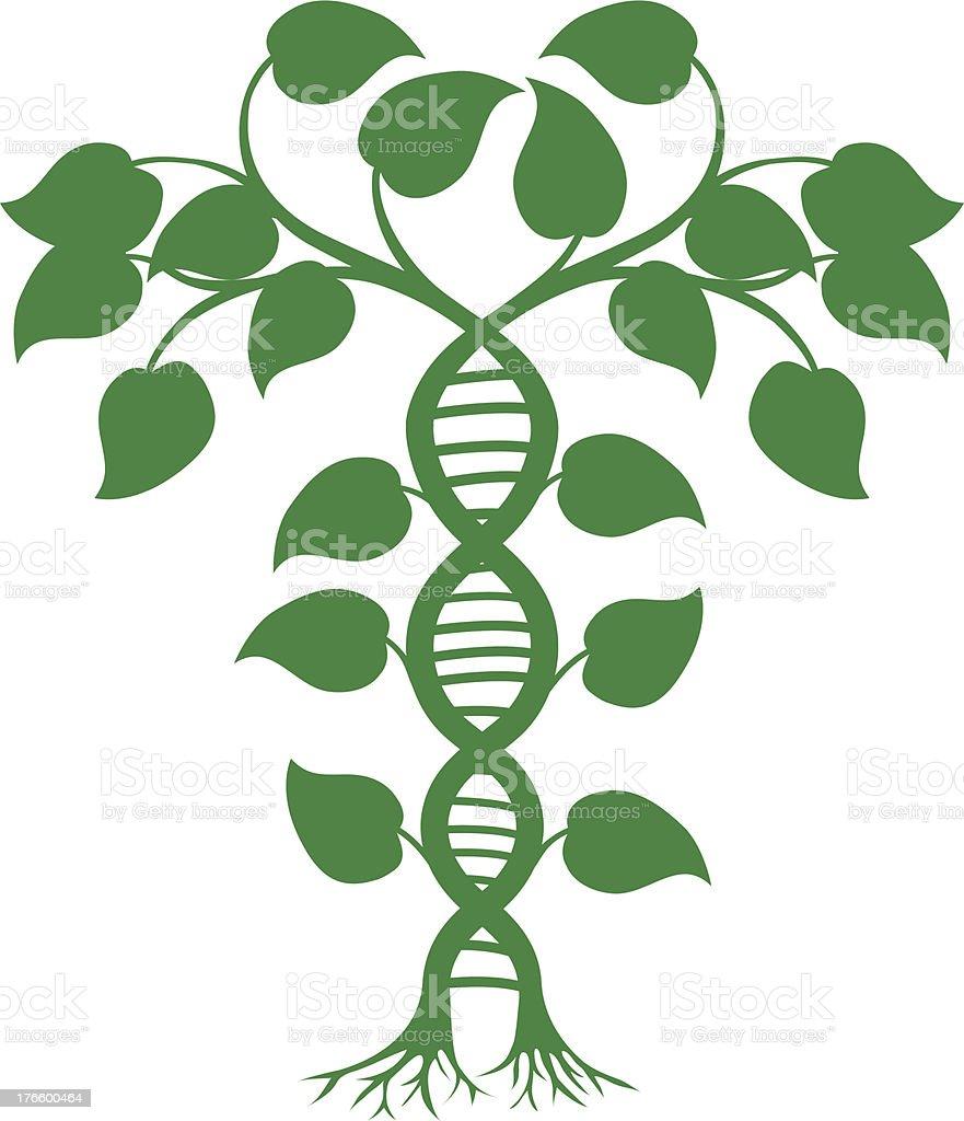 DNA nature plant vector art illustration