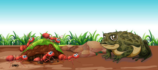 nature scene with toad and ants - amphibians stock illustrations