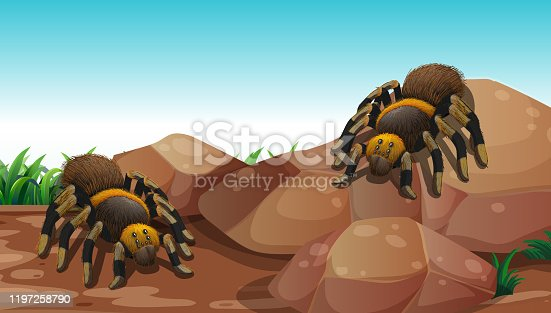Nature scene with two spiders on rock illustration