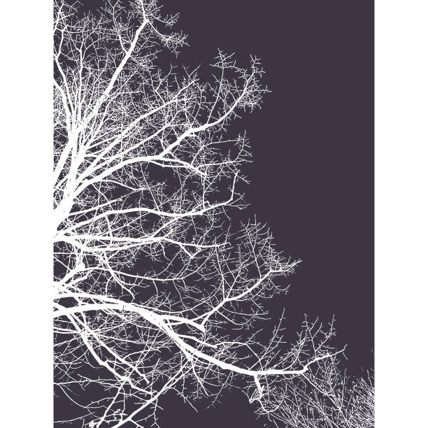 bildbanksillustrationer, clip art samt tecknat material och ikoner med natur silhuett bakgrund - abstract silhouette art