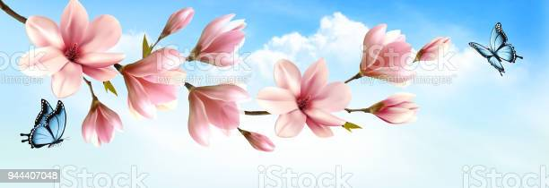 Nature spring background with beautiful magnolia branches and vector vector id944407048?b=1&k=6&m=944407048&s=612x612&h=hlv0yi2o0clofdjsnesqlppw5truixhzmdyr7slgqom=
