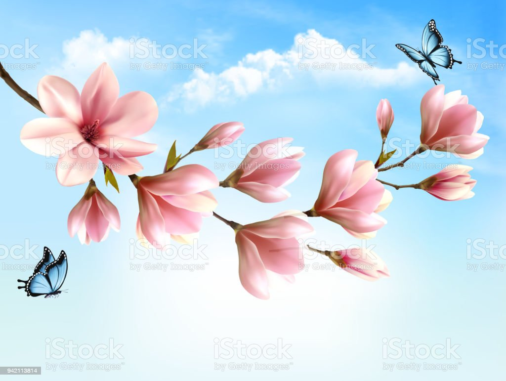 Nature Spring Background With Beautiful Magnolia Branches Royalty Free