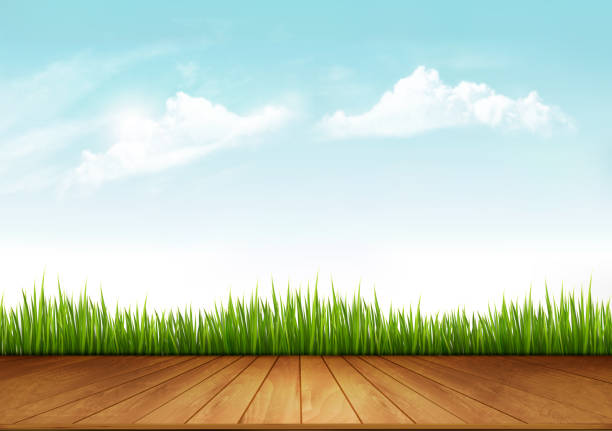 Nature spring background with green grass and a wooden deck. Vector. Nature spring background with green grass and a wooden deck. Vector. patio stock illustrations