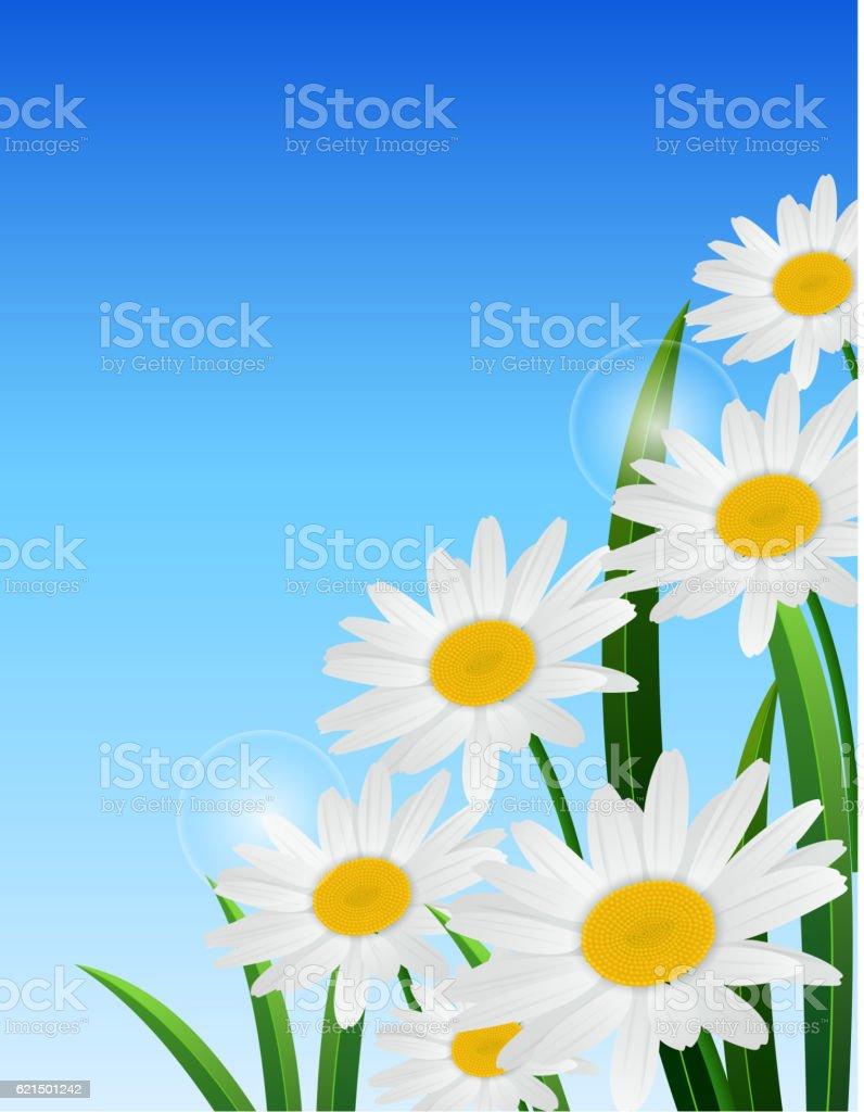 Nature spring daisy flower on blue sky background nature spring daisy flower on blue sky background - immagini vettoriali stock e altre immagini di blu royalty-free