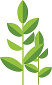 Nature tea plant green vector leaves isolated on white
