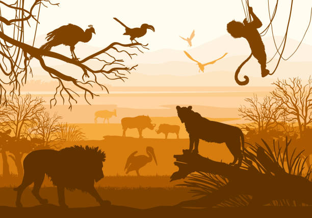 nature with wild animals (lion, boar, goat, cormorant, monkey, peacock,) Beauty of nature with wild animals (lion, wild boar, goat, cormorant, monkey, bird, peacock,) marmoset stock illustrations