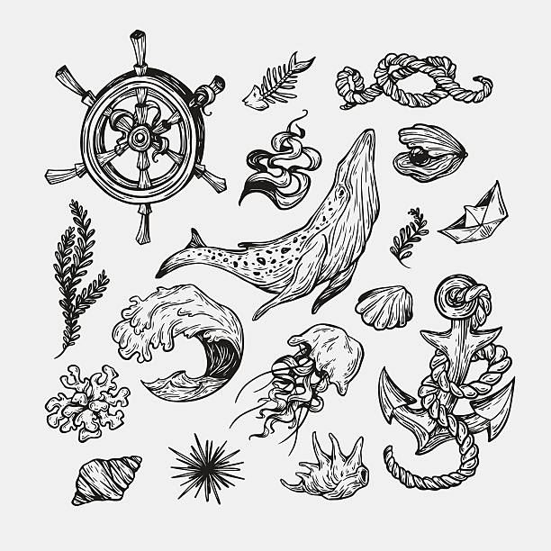 nautical collection. - austernschalen stock-grafiken, -clipart, -cartoons und -symbole