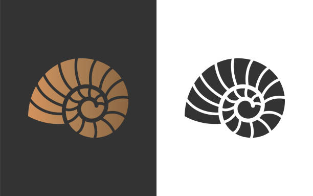 nautilus copy Vector illustration with seashell nautilus. Object for your logo / card / flyer. nautilus shell stock illustrations