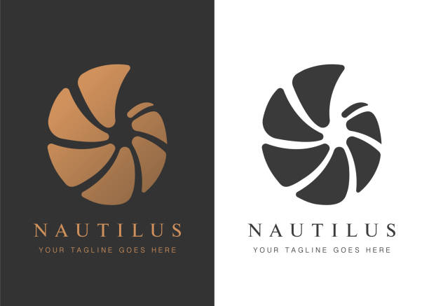 nautilus- copy - snail stock illustrations