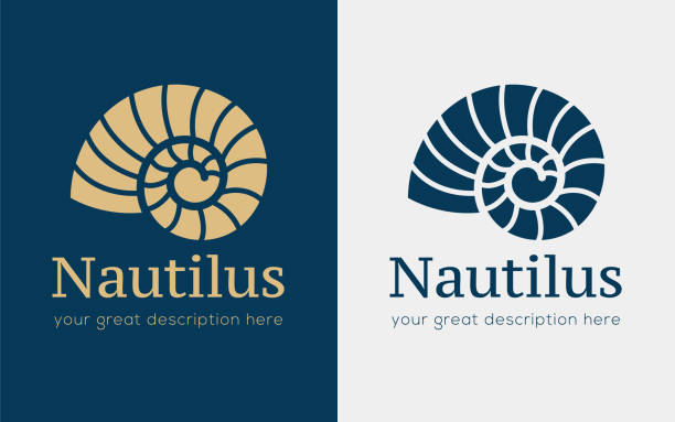 nautilus copy Vector illustration with seashell nautilus. Object for your icon / card / flyer. nautilus shell stock illustrations