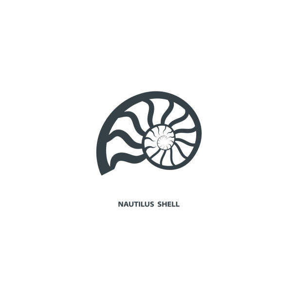 Nautilus shell icon. Nautilus shell icon, isolated on white background. Logo for your project. Vector illustration. nautilus shell stock illustrations