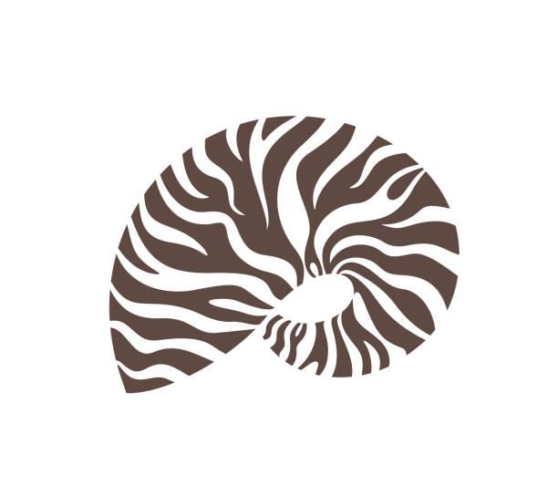 Nautilus shell. Isolated nautilus on white background EPS 10. Vector illustration nautilus shell stock illustrations