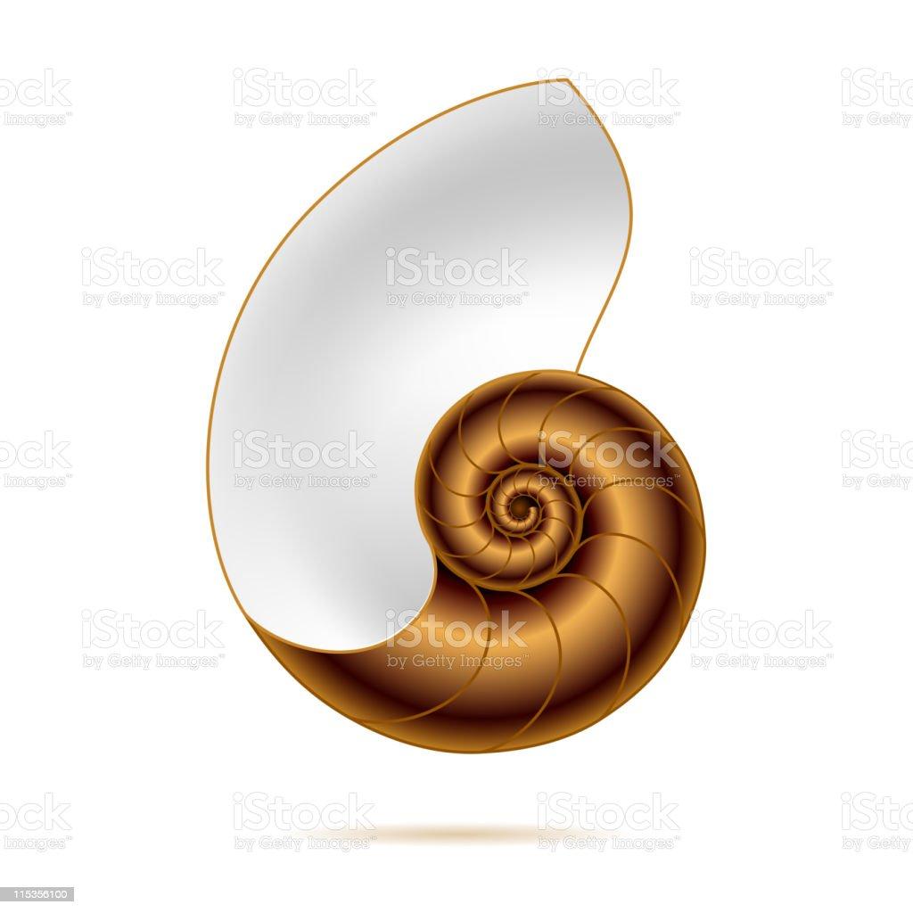 Nautilus shell vector art illustration