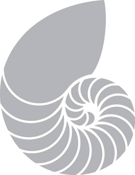 Nautilus shell Vector illustration (EPS) nautilus shell stock illustrations