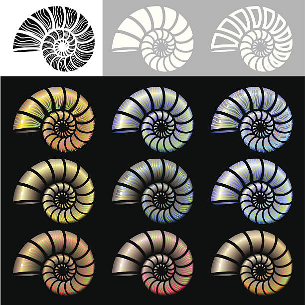 Nautilus Shells icon set A set of 9 shell icons in different colours plus 3 black & white versions. Background on different level, global colours and only linear gradient used, very easy to edit. nautilus shell stock illustrations