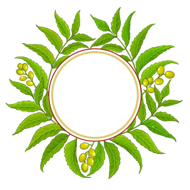 Best Neem Leaf Illustrations, Royalty-Free Vector Graphics ...