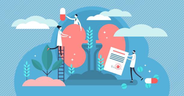 ilustrações de stock, clip art, desenhos animados e ícones de nephrology vector illustration. flat tiny kidney healthcare persons concept - diálise