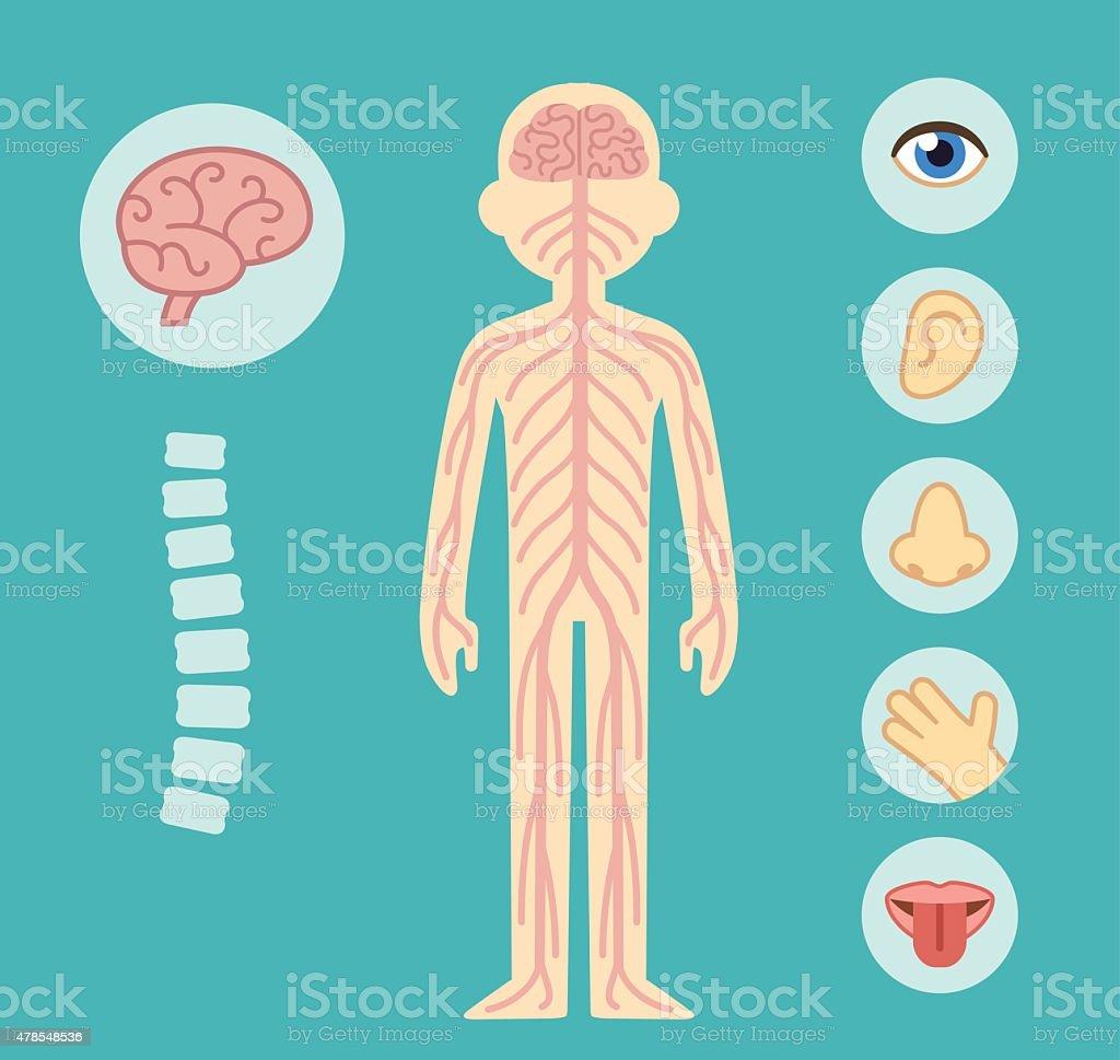 Ilustración de Sistema Nervioso Central y más banco de imágenes de ...