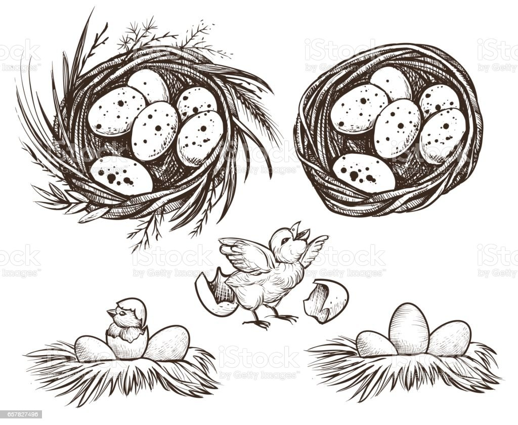Nest set and hatching chicken. Vector drawing. vector art illustration