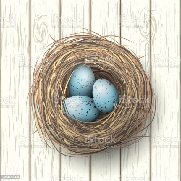 Nest with blue eggs on white wooden background illustration vector id656623696?b=1&k=6&m=656623696&s=612x612&h=chqvry 5mjlyd6761p7ngsizrauwkc9uk1lyaegybc8=