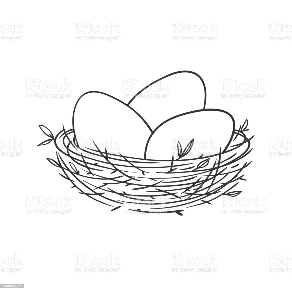 nest with eggs isolated on white vector art illustration