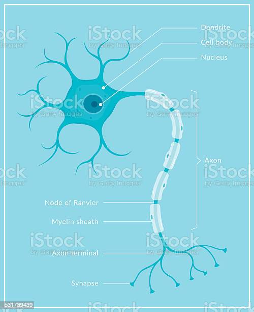 Neuron Stock Illustration - Download Image Now
