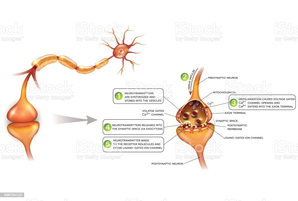 Neurons Stock Vector Art & More Images of Anatomy 656794120 | iStock