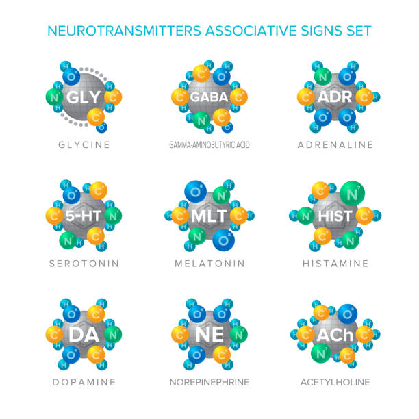 Neurotransmitters vector signs with associative molecular structures set Neurotransmitters vector signs with associative molecular structures set amino acid stock illustrations