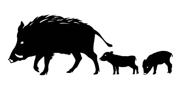 new year's card material: boar, silhouette - year of the pig stock illustrations, clip art, cartoons, & icons