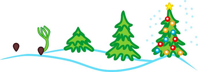Weihnachtsbaum Samen.Silvester Landschaft Stadien Des Wachstums Der Fichte Vom Samen Zum Weihnachtsbaum Mit Spielzeug Stock Vektor Art Und Mehr Bilder Von Baum