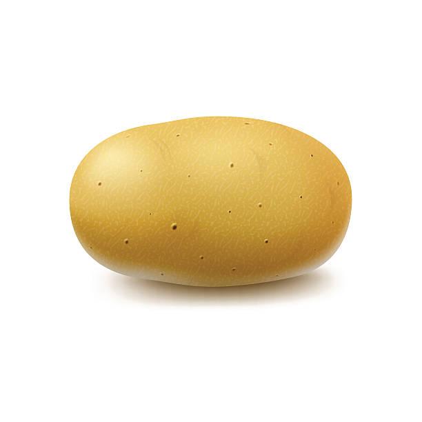 new yellow raw whole unpeeled potato isolated - kartoffeln stock-grafiken, -clipart, -cartoons und -symbole