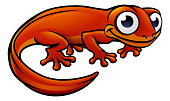 An illustration of a newt or salamander cartoon character