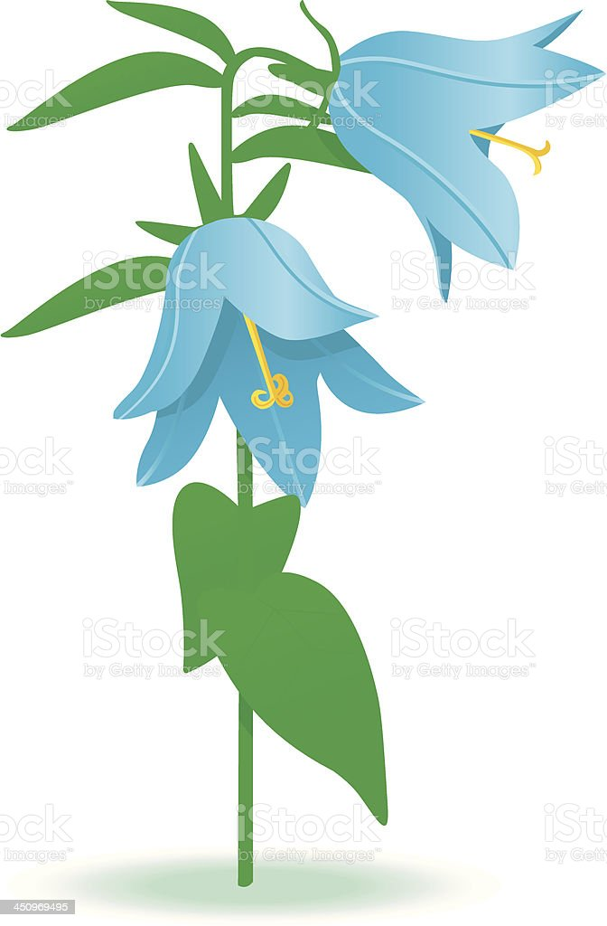nice blue bellflower. vector art illustration