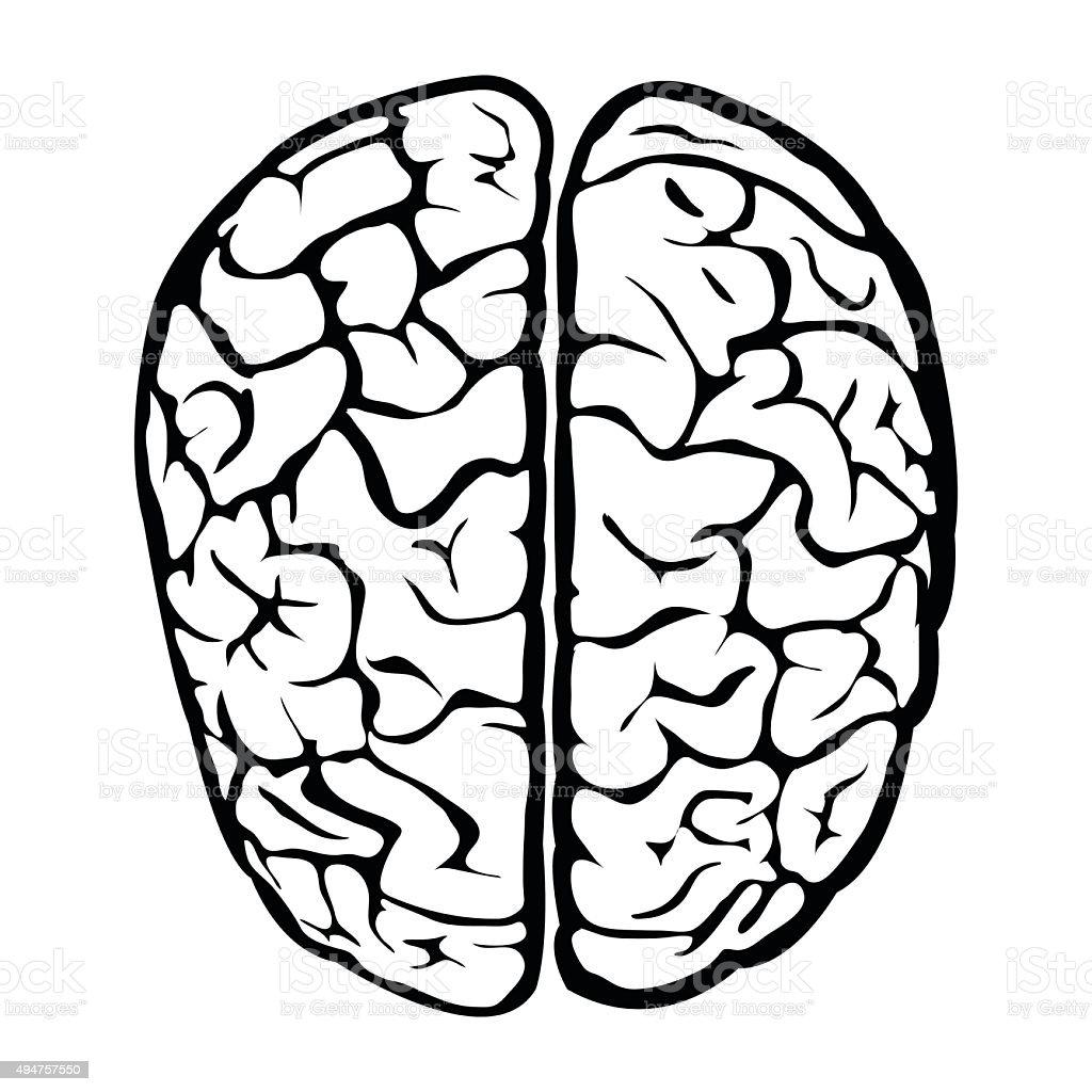 Cervello umano di Nizza - illustrazione arte vettoriale
