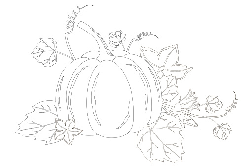 Nice ripe pumpkin and flowers coloring book page isolated on a white background.