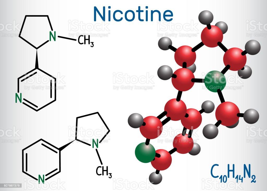 Nikotinmolekül Ist Alkaloid Gefunden In Der Familie Der ...
