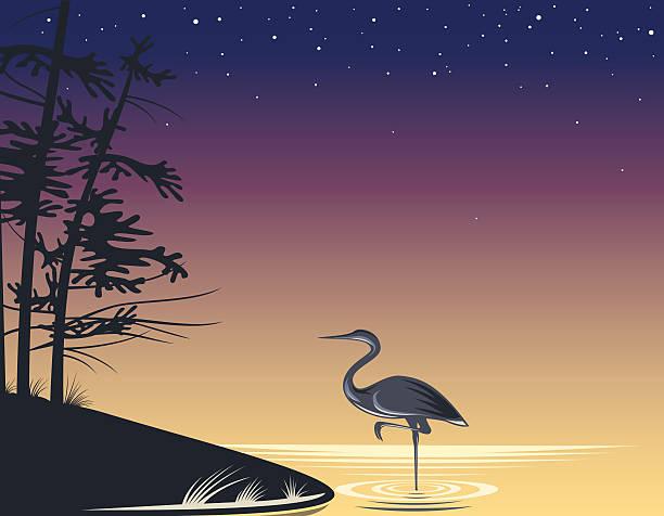 Night Lake Heron standing near the shore at night on the lake. lakeshore stock illustrations